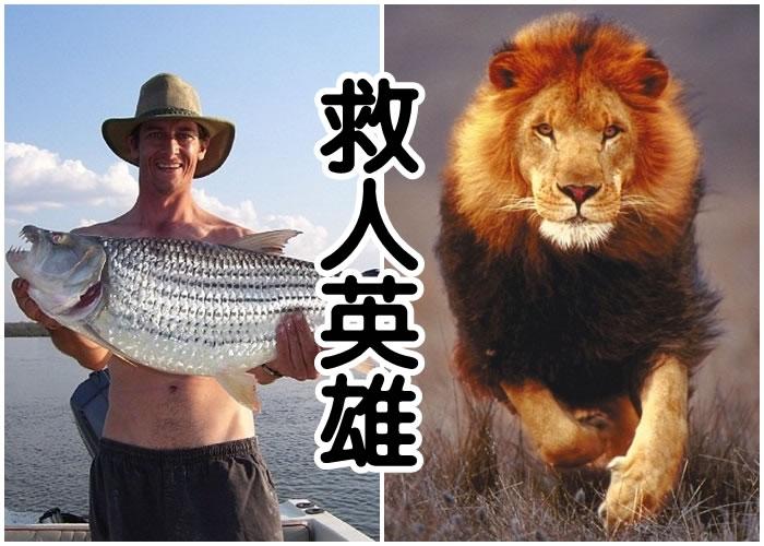 斯韦尔斯(左图)舍身救人,右图非涉事狮子。