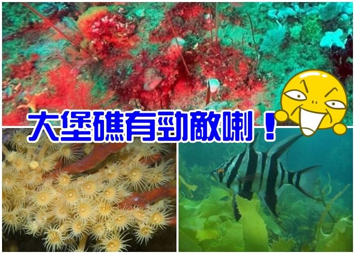 威尔森岬国家公园百米深的水底,有一个深海珊瑚礁。