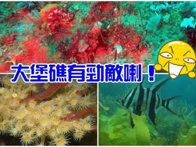 澳洲维多利亚省威尔森岬国家公园水底发现深海珊瑚礁 比大堡礁更大更漂亮