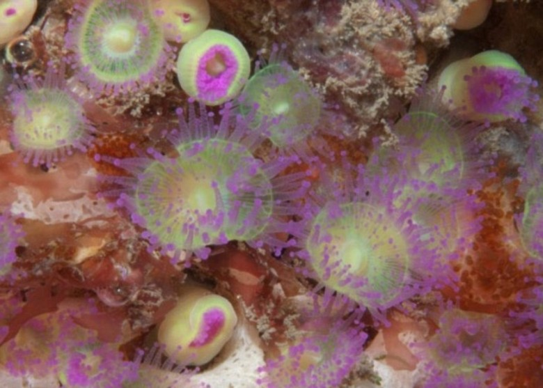水域充满色彩缤纷的海绵动物和无脊椎动物