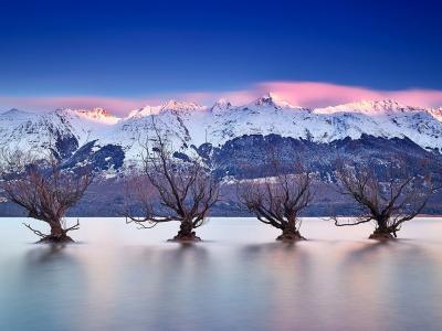 新西兰南岛瓦卡蒂普湖著名的格伦诺基柳树矗立于水中