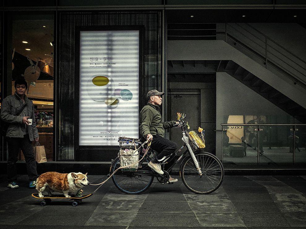 台北的遛狗人