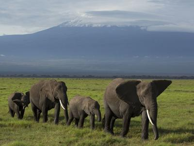 安博塞利国家公园大象游行