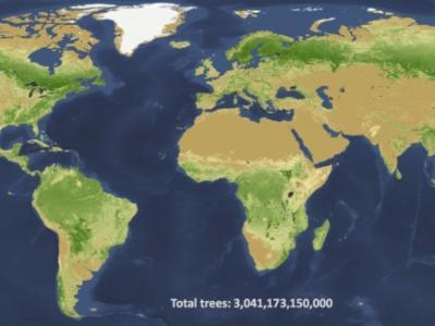 地球有多少棵树?研究团队估计有3.04万亿株