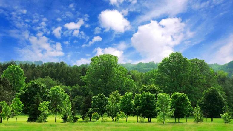 以人均计算,你和我拥有422株树。