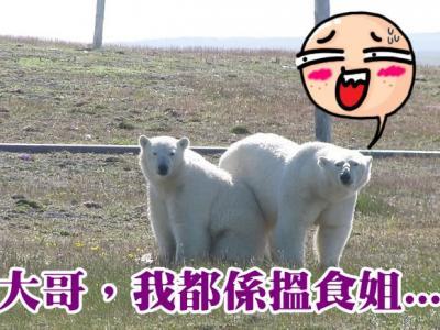 """北极熊""""围堵""""科研基地 俄科学家陷困兽斗"""