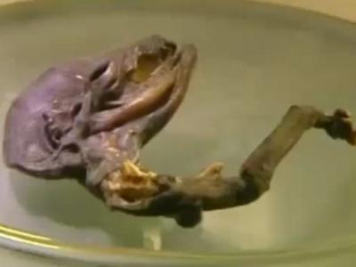 """俄罗斯圣彼德堡附近河岸发现疑似""""外星人""""的不明生物残骸"""
