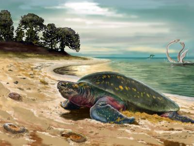 哥伦比亚发现世界上最古老的海龟化石 距今1.2亿年前