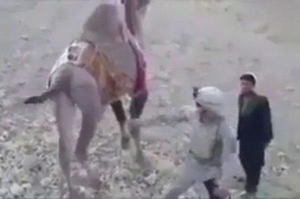 驻阿富汗美国士兵挑衅骆驼惨被踢倒