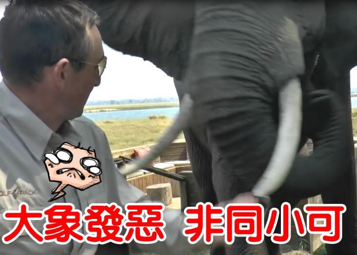 大象推开坐在野餐桌的男子