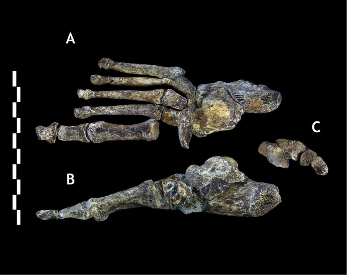 """南非洞穴发现人类新物种""""纳莱蒂人"""" 人类起源研究的新线索"""