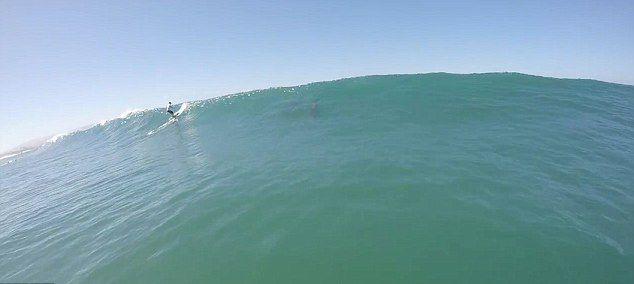 美国男子在加利福尼亚州赫莫萨海滩划桨冲浪时险遇海豚迎面袭击