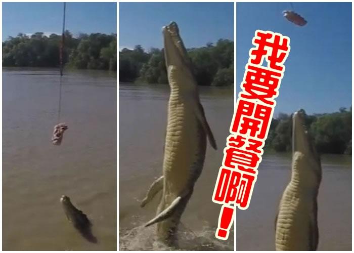 鳄鱼为了抢食,向人们展示吓人一跳的跃水能力。