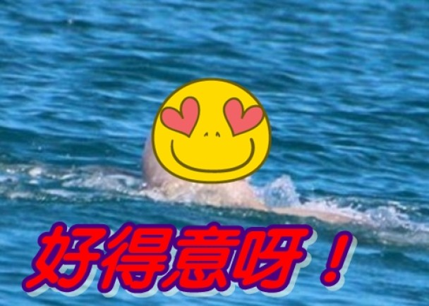 澳洲短鳍海豚样貌趣致
