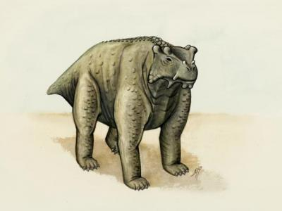 """二叠纪爬行动物""""阿科坎瘤头龙""""能像牛或河马那样用四肢站立"""