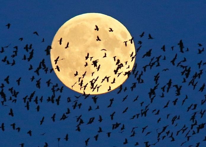 白俄罗斯一群候鸟横越