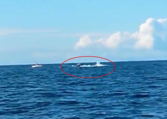 3条杀人鲸在海中捕猎海豚,溅起连串浪花(红圈)。