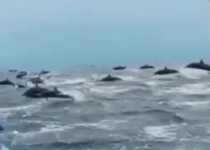 大量海豚从小艇的两边的海面同时跃动