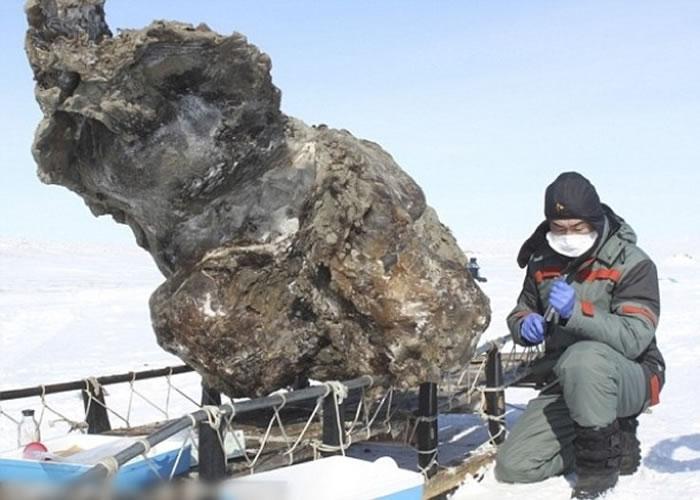 专家旁边的巨物,内藏有长毛象皮。