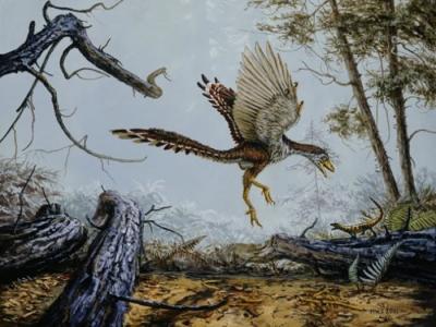 始祖鸟比早前预计的能飞得更远更久 甚至能飞越恐龙头顶