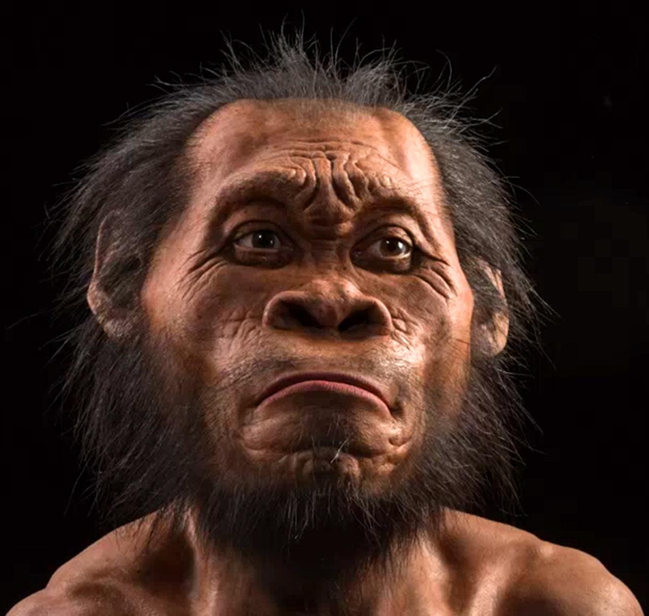 南非纳勒迪人化石引发进一步讨论:使用工具和树栖可能性并存