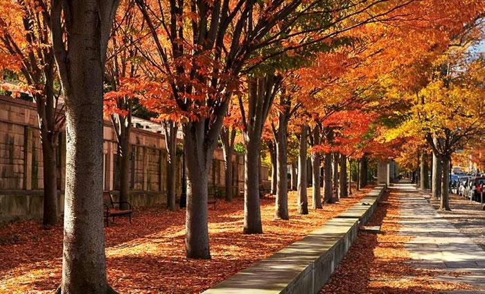 多个环境因素可能影响秋季植物休眠的时机
