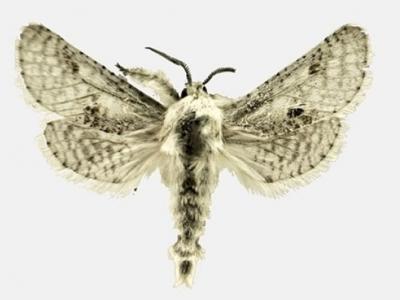 美国新种飞蛾命名权放上eBay拍卖