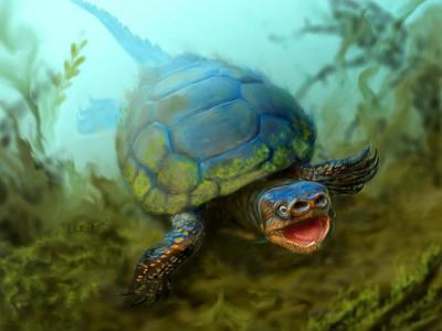 美国犹他州发现7600万年前化石新物种——猪鼻龟Arvinachelys goldeni