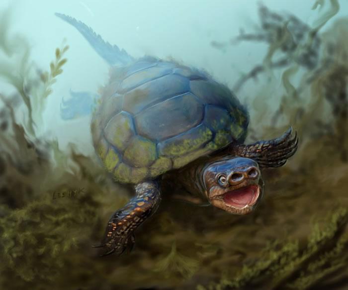 画家笔下的猪鼻龟外貌