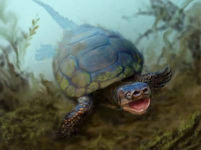 美国犹他州出土白垩纪时代猪鼻龟化石