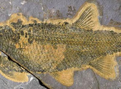 三叠纪生物复苏期劳亚大陆东部的淡水鱼群研究