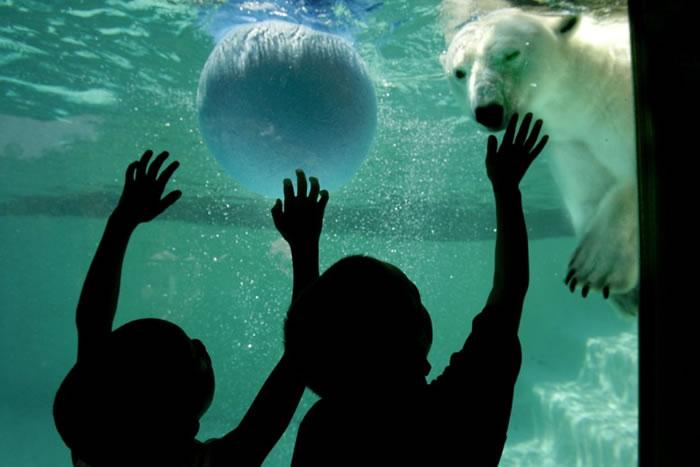 康戴克在水中玩球