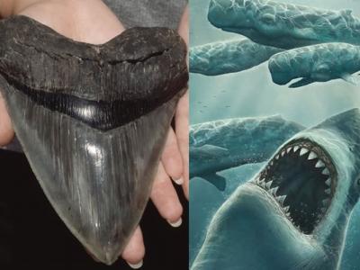美国北卡罗莱纳州海滩发现巨齿鲨牙齿化石