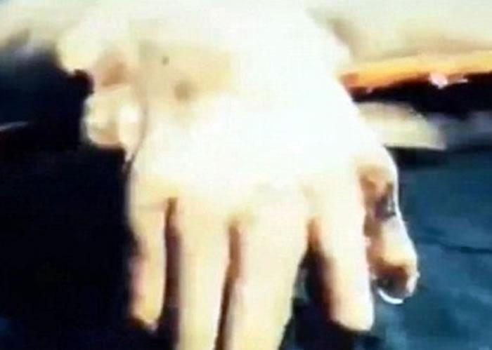 该生物有像人一般的手