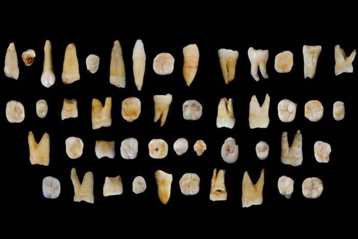 湖南道县所发现的47枚人类牙齿化石对东亚现代人起源和演化提供新线索