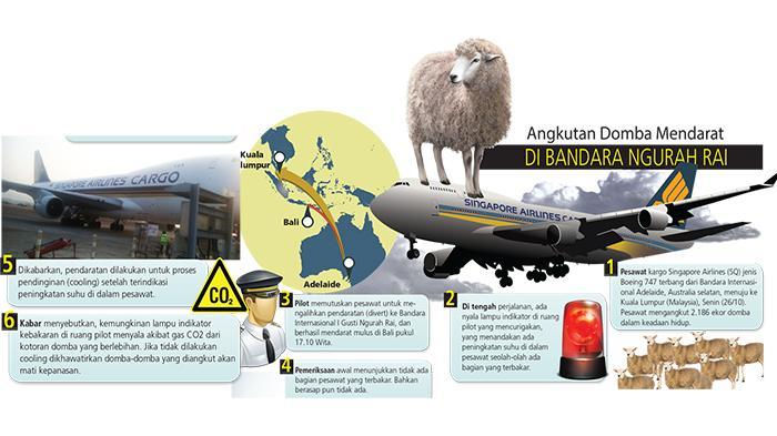 2186只山羊空中放屁 新加坡航空公司班机迫降巴厘岛