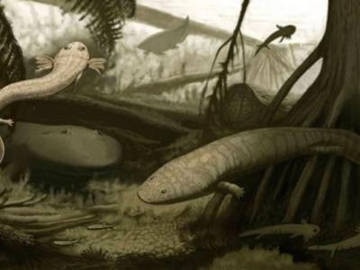巴西发现2种两栖类动物化石 南美洲之前未发现过蝾螈类化石