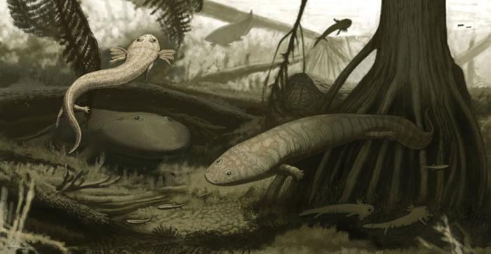 图像再现古代湖泊生态系统中灭绝的两栖动物新物种Timonya anneae(左)和Procuhy nazariensis(右)。