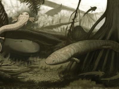 南美最古老爬行动物遗骨旁发现两种2.78亿年前两栖动物化石