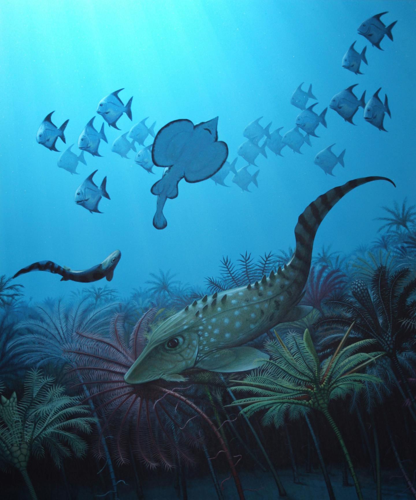 在密西西比纪开始时(即在被称作 Hangenberg 事件的物种大灭绝刚刚发生之后),海洋由小型鱼类主导。