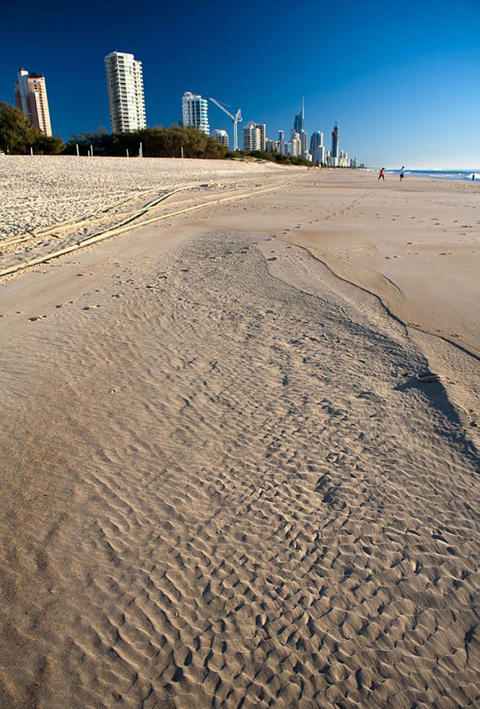 该生物是当地人露辛达·弗瑞在海滩散步时发现的