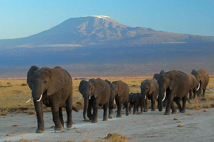 科学家称,下一轮大灭绝到来或导致大型动物灭绝,而且短期内无法恢复