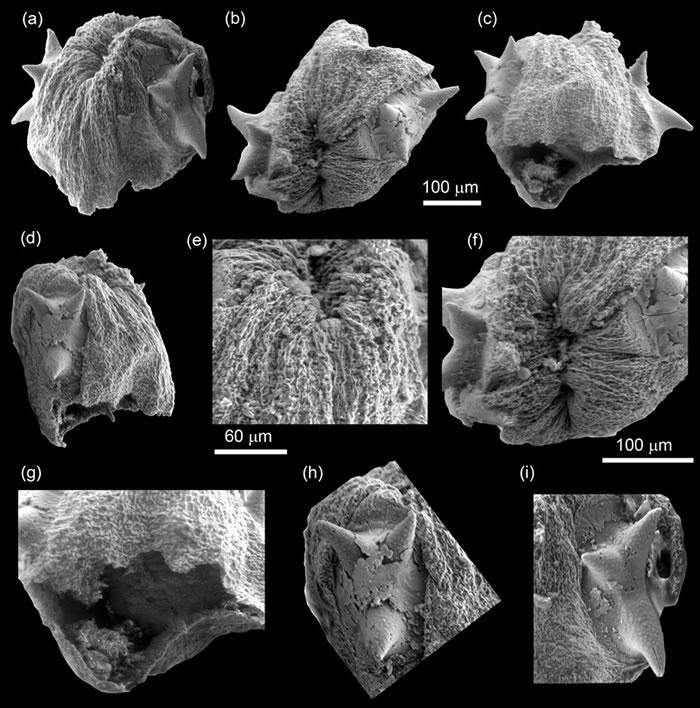 宽川铺始祖幼虫的副模标本