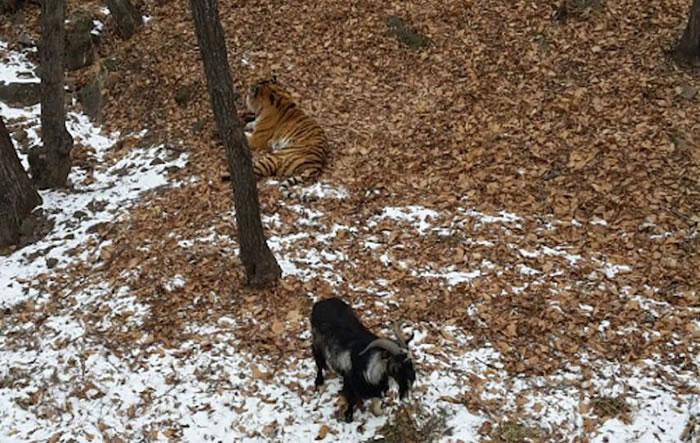 两只动物已经一起生活了四天