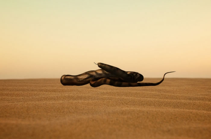 新研究表明蛇类是在洞穴中存活和捕食时才