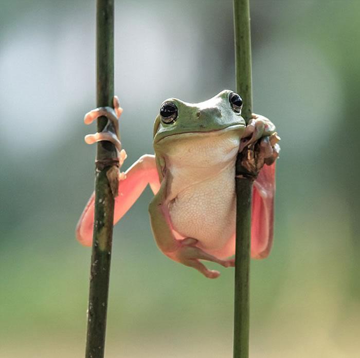 青蛙的逗乐模样让人捧腹