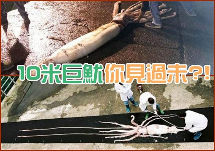 西班牙渔夫捕捉到10米长巨型鱿鱼