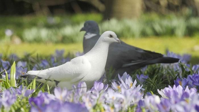 科学家训练鸽子识别癌症