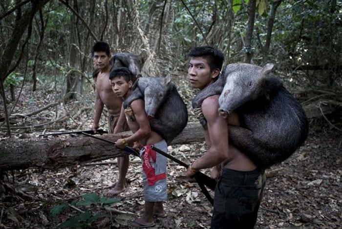 """巴西亚马逊雨林神秘部落""""阿佤族""""妇女用乳哺育野生动物"""