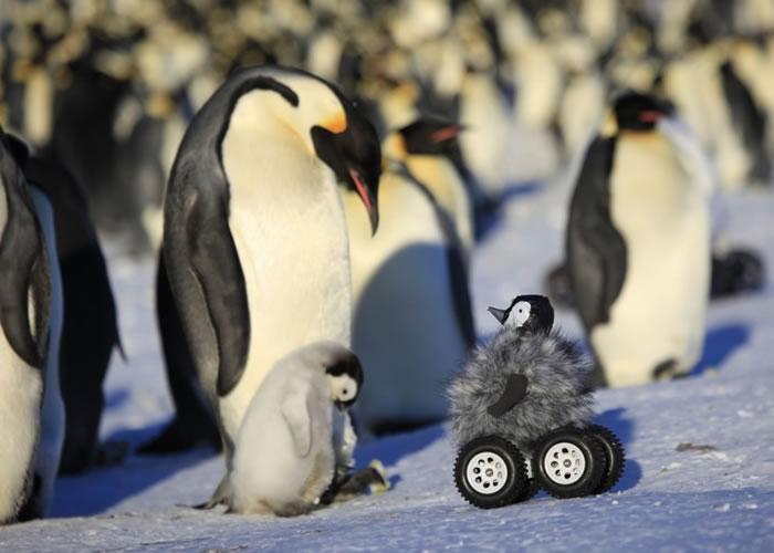 """真小企鹅望着""""特务小企鹅"""",似在问:""""你系边个?"""""""
